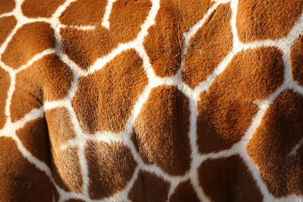 Giraffe texture pattern fur wallpaper