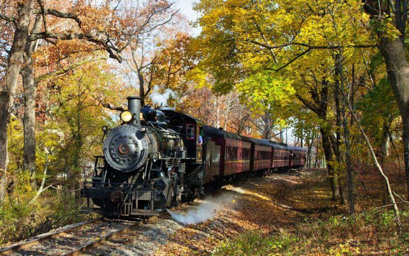 Train Forrest wallpaper