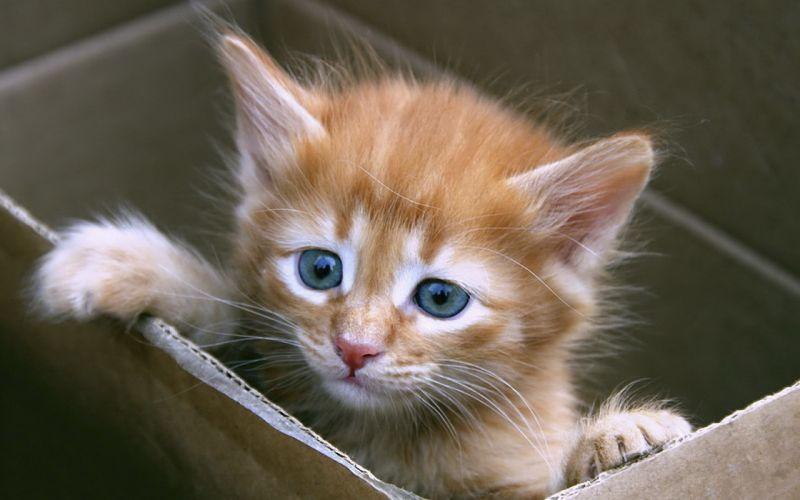 Kitten Cute Carton wallpaper