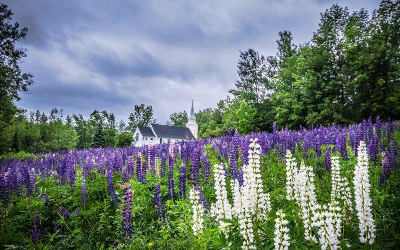 New Hampshire church religion flower wallpaper