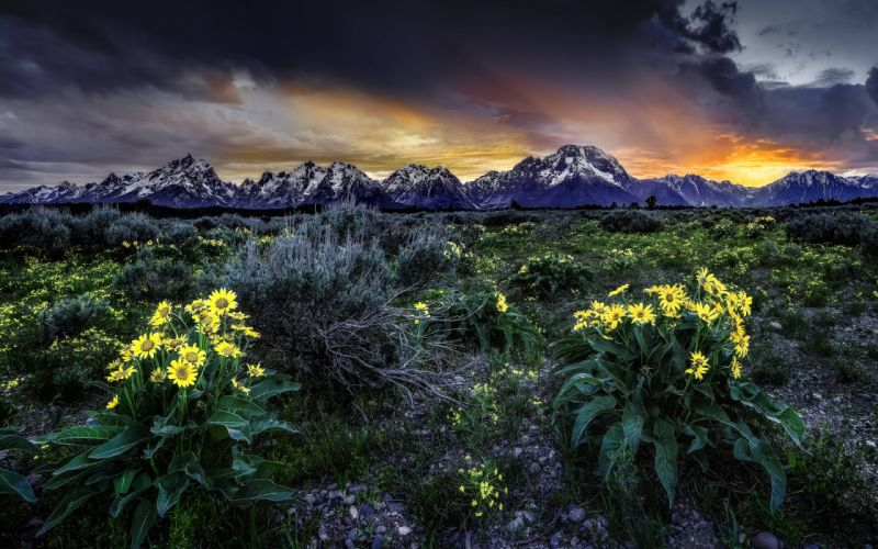 sunset mountains field flowers landscape wallpaper
