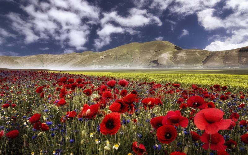 Italy the Apennines mountains flowers poppies cornflowers meadow wallpaper