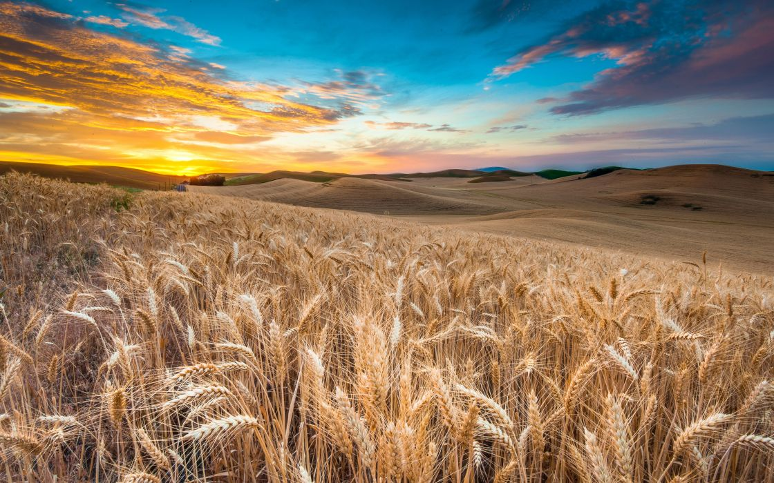 nature sky landscape field clouds wheat grass wallpaper