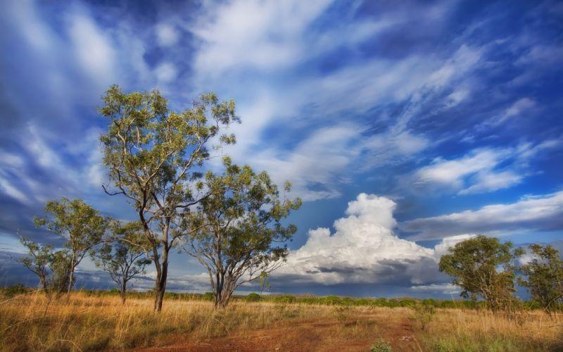 Australia sky clouds tree wallpaper