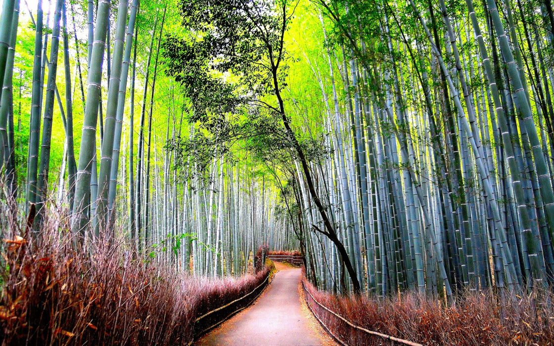bamboo forest road nature wallpaper