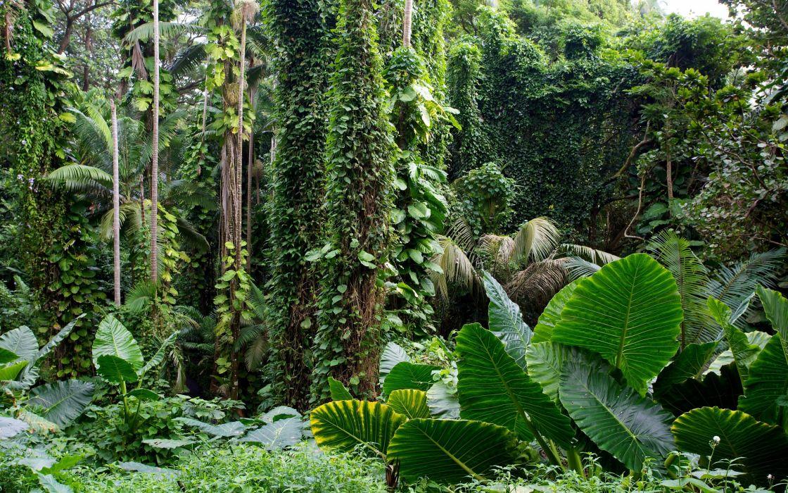 Hawaii Tropical Botanical Garden forest tropical wallpaper