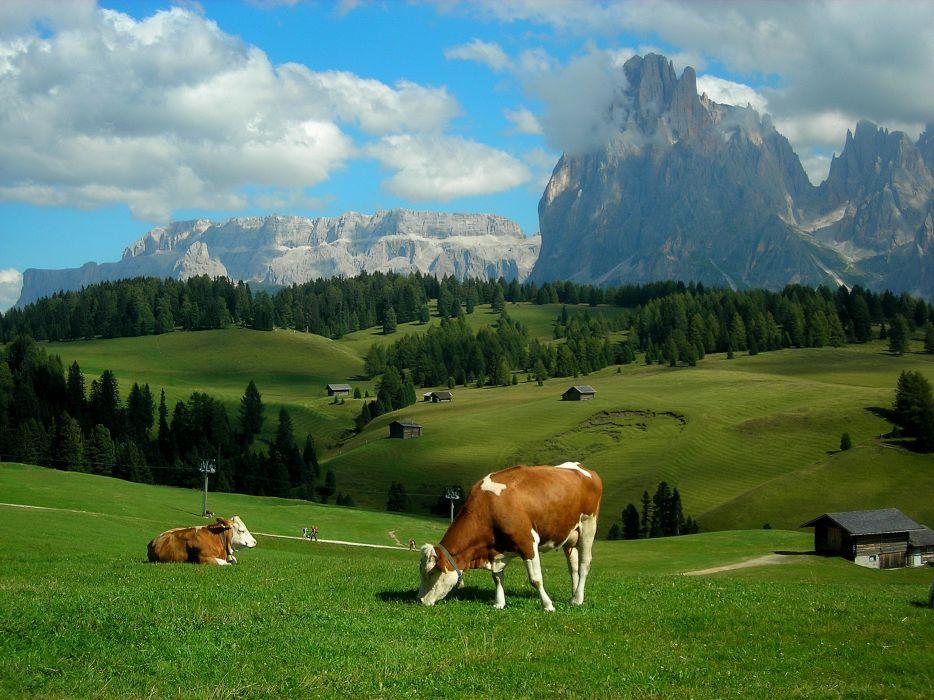 Alps meadows hills mountains cows landscape rustic farm wallpaper