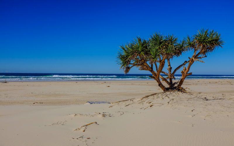 sea beach palm tree landscape ocean waves wallpaper
