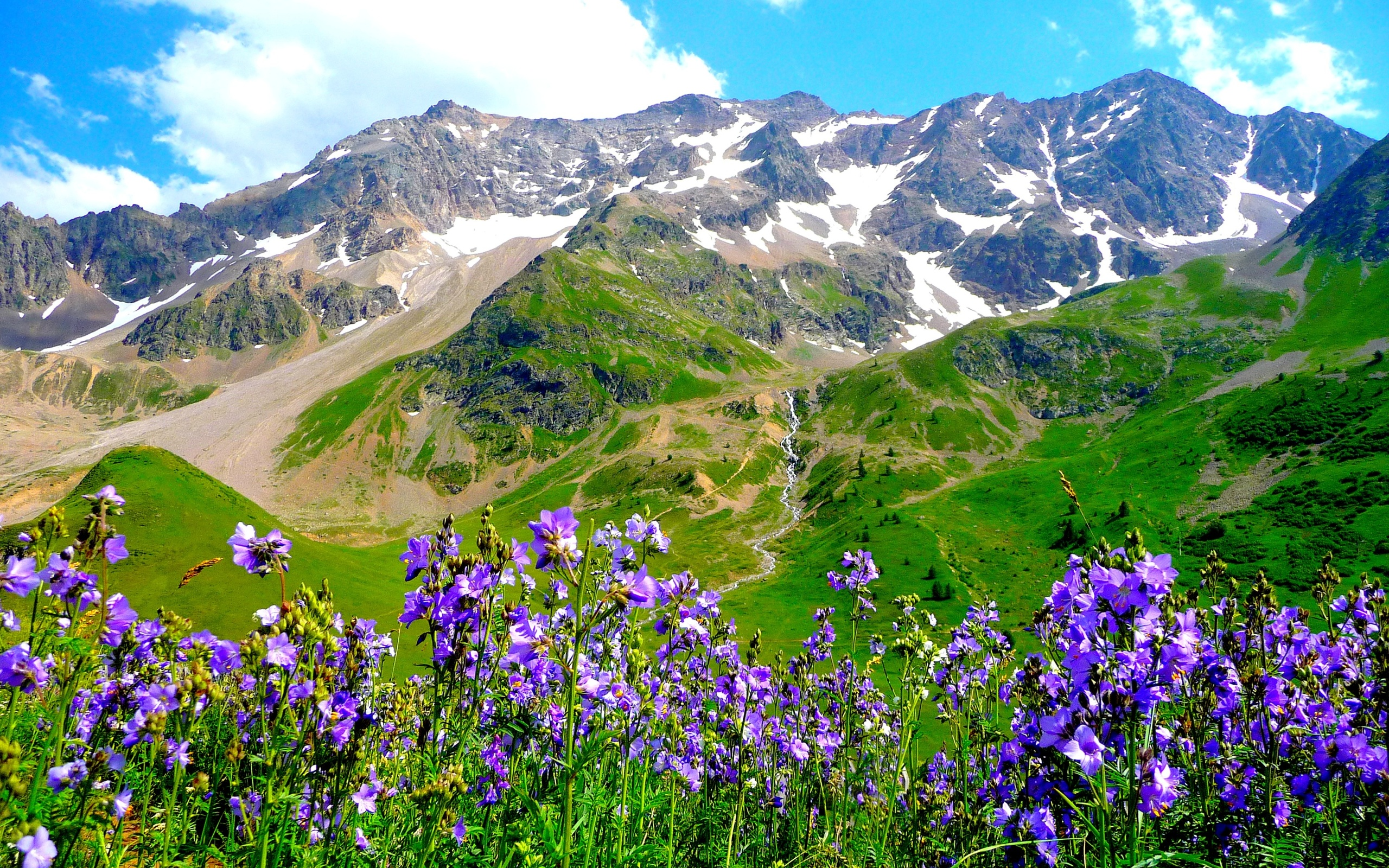 Mountains alps flowers landscape wallpaper 2560x1600 for Flower landscape