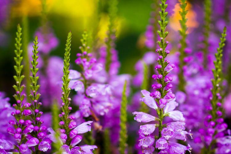 flowers larkspur field wallpaper
