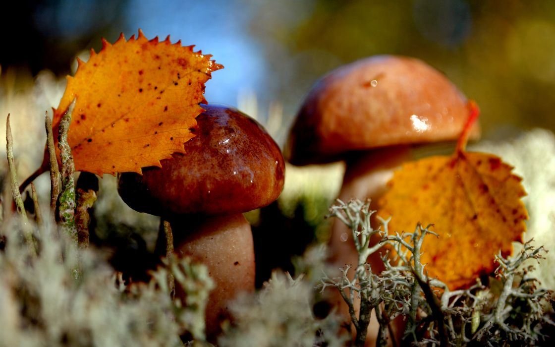 nature mushrooms autumn moss wallpaper