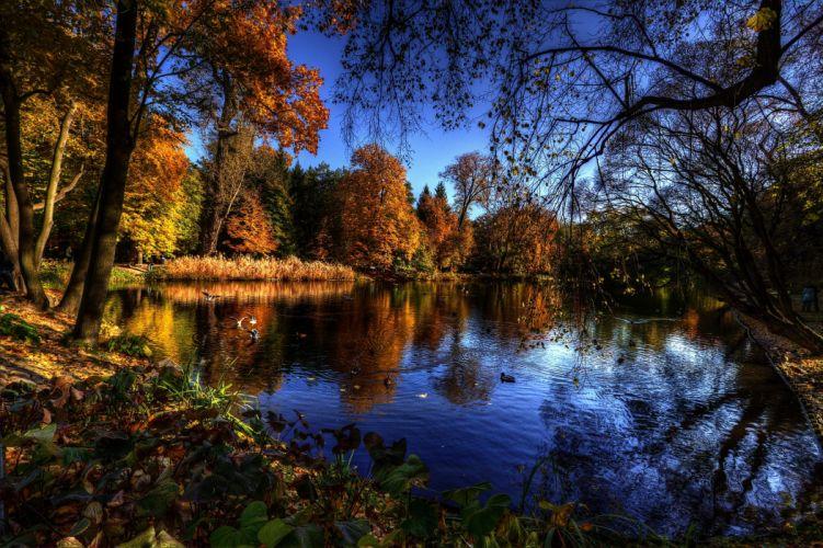 autumn lake trees birds landscape wallpaper