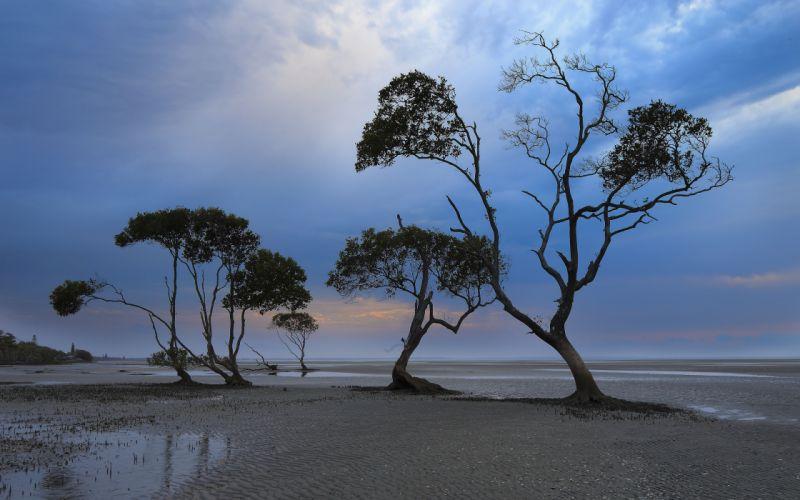 coast trees sky landscape f wallpaper