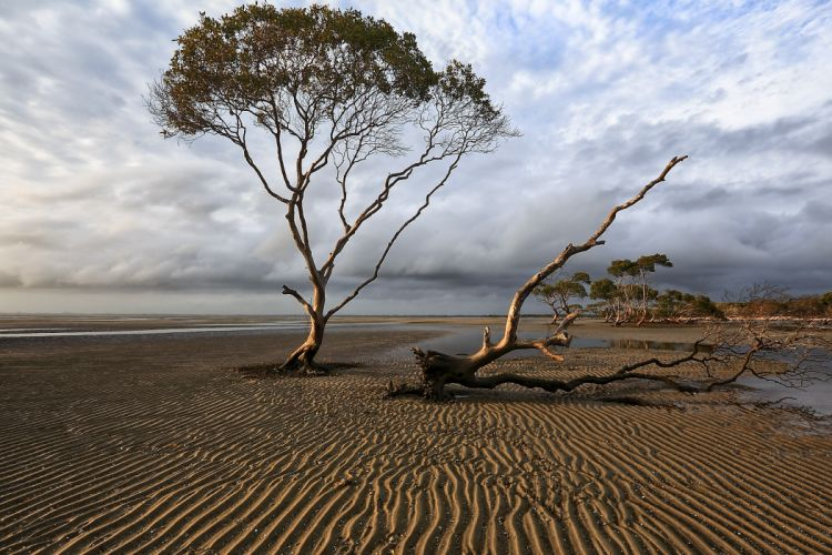 coast trees sky landscape wallpaper