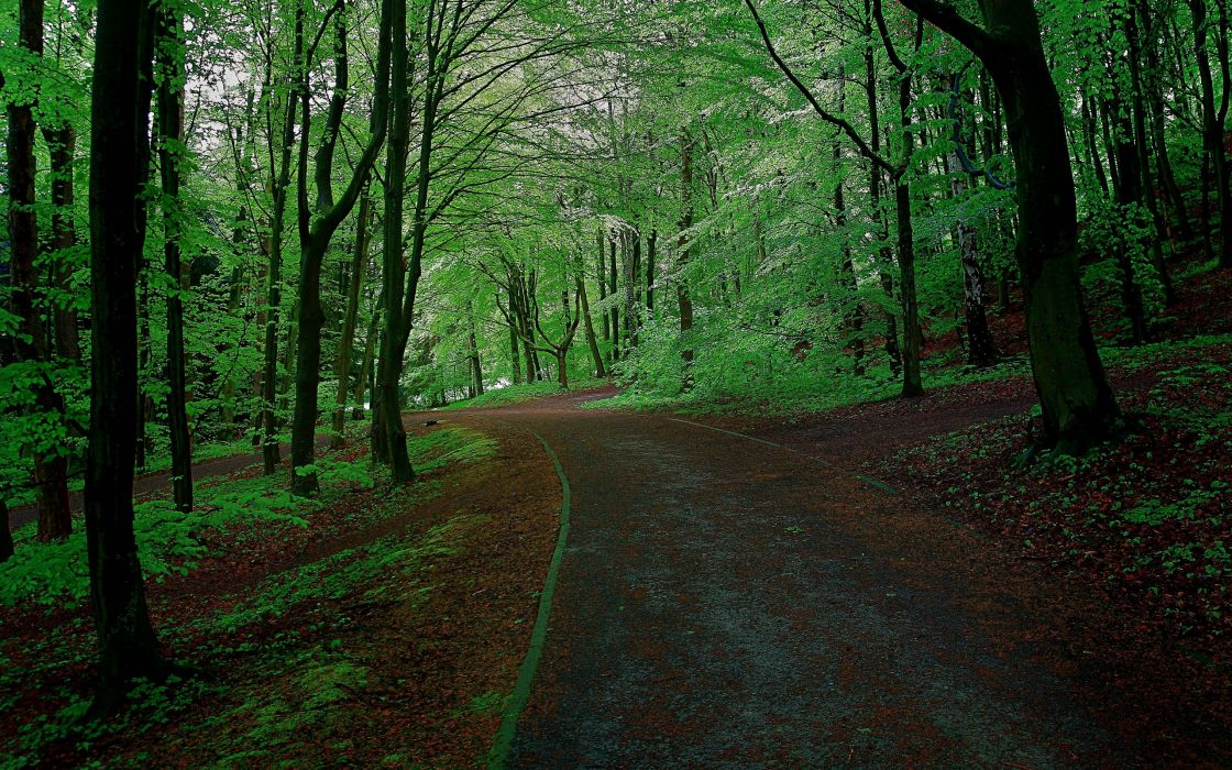 forest park trees road landscape   d wallpaper