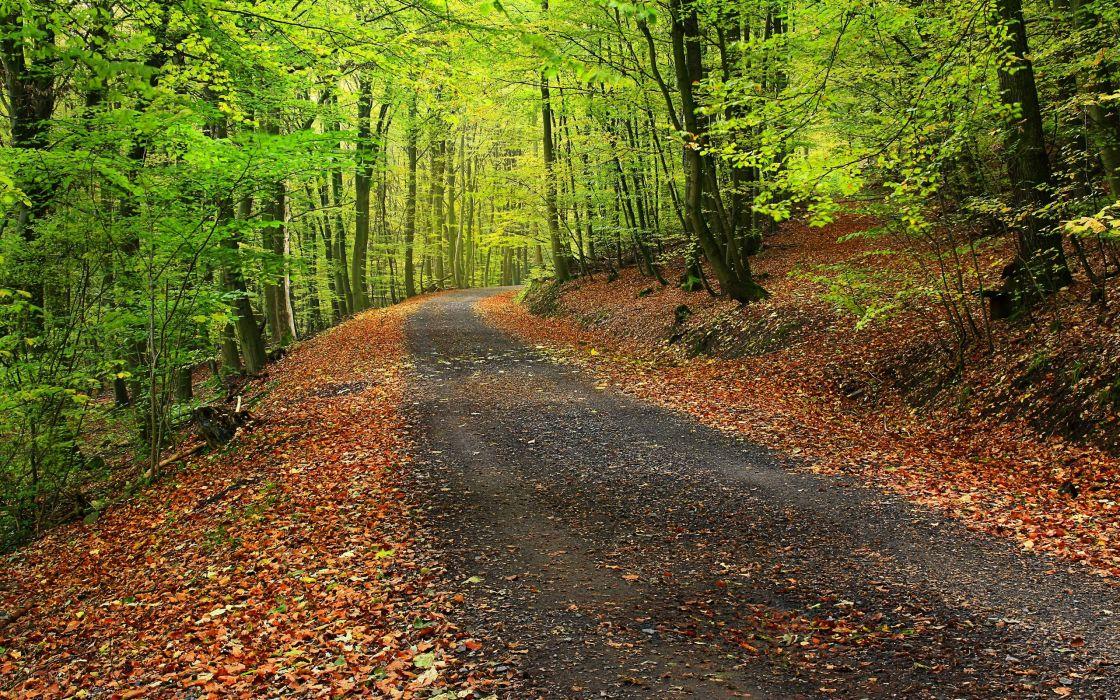 forest park trees road landscape autumn wallpaper