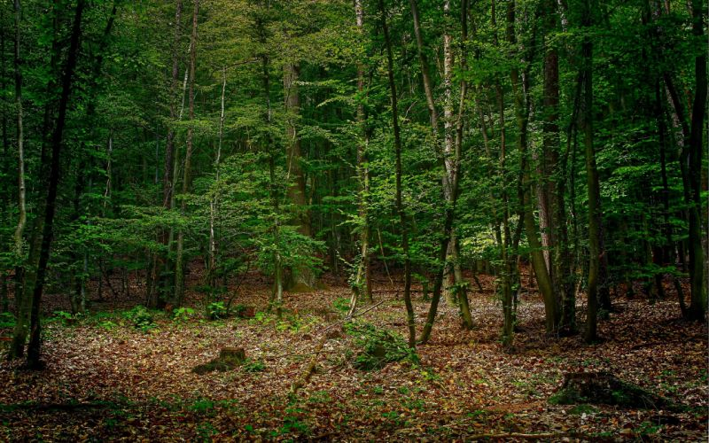 forest trees nature d wallpaper