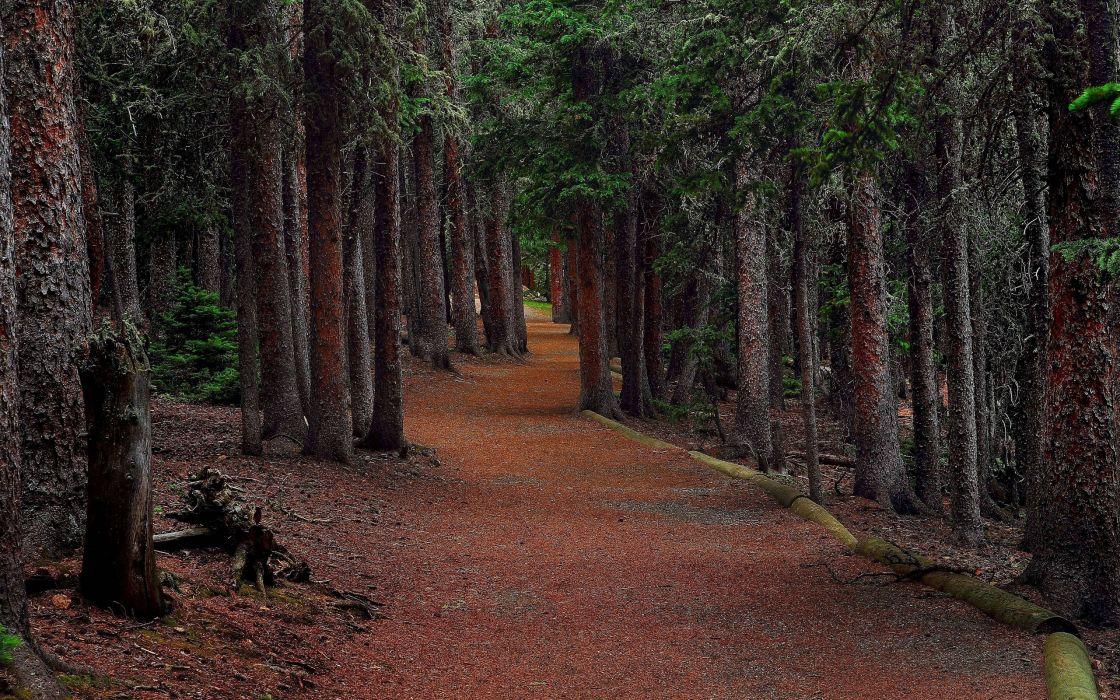 forest trees road eating landscape wallpaper