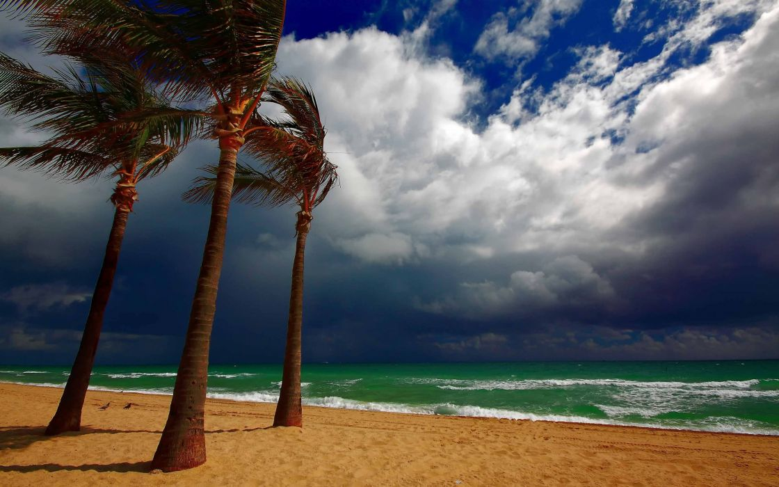 sea clouds beach palm trees landscape ocean wallpaper