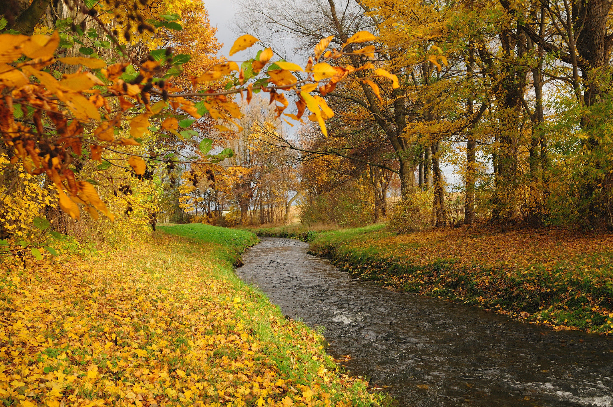 latvian autumn forest river - photo #28