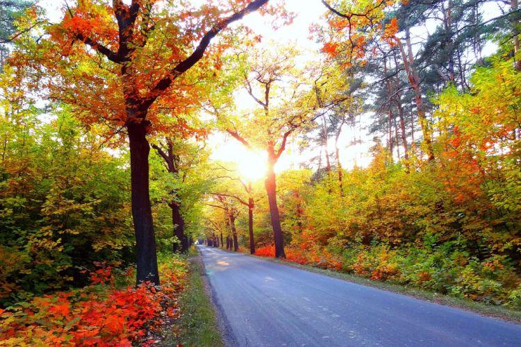 autumn road trees landscape wallpaper