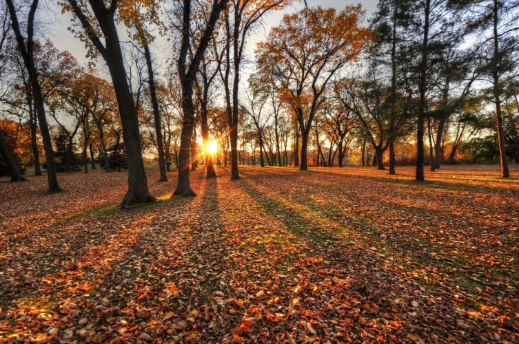 autumn trees leaves park sun wallpaper