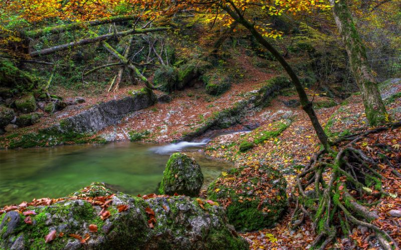 Autumn water stones moss trees river lake leaves g wallpaper