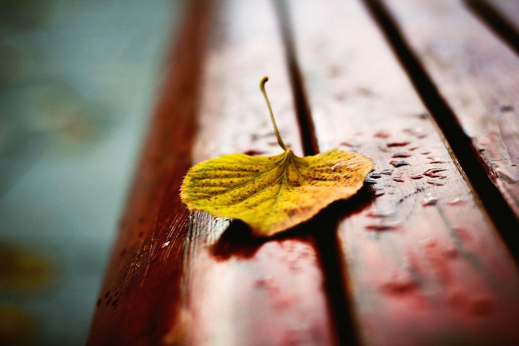 bench autumn yellow leaf shop bokeh wallpaper