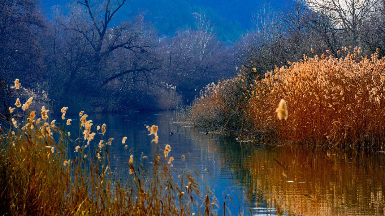 duck lake wood reeds mountains autumn wallpaper