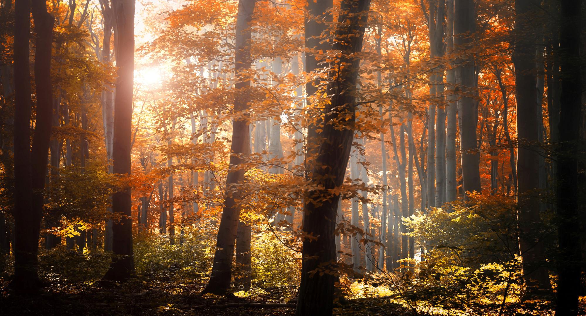 Forest autumn foliage trees leaves orange yellow light ...