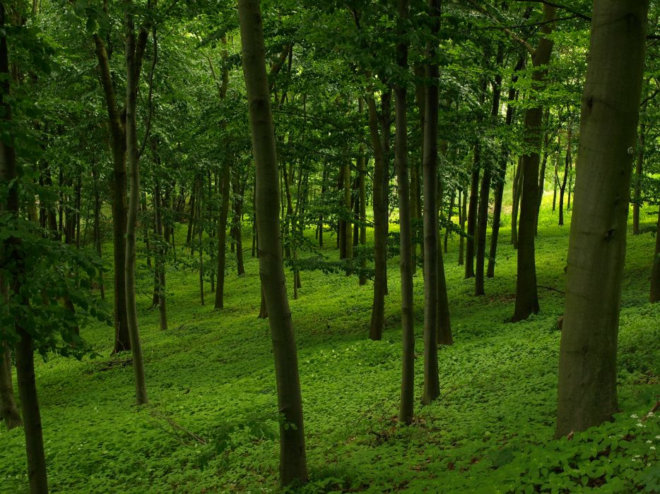 forest trees nature landscape mood wallpaper