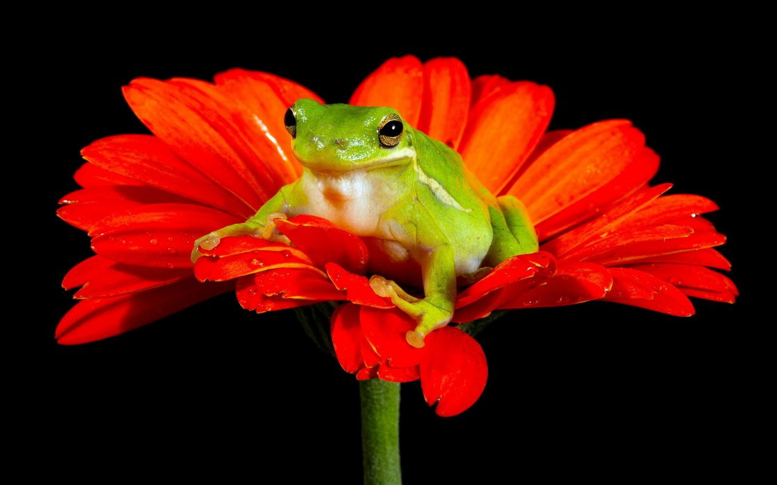 frog flower nature wallpaper