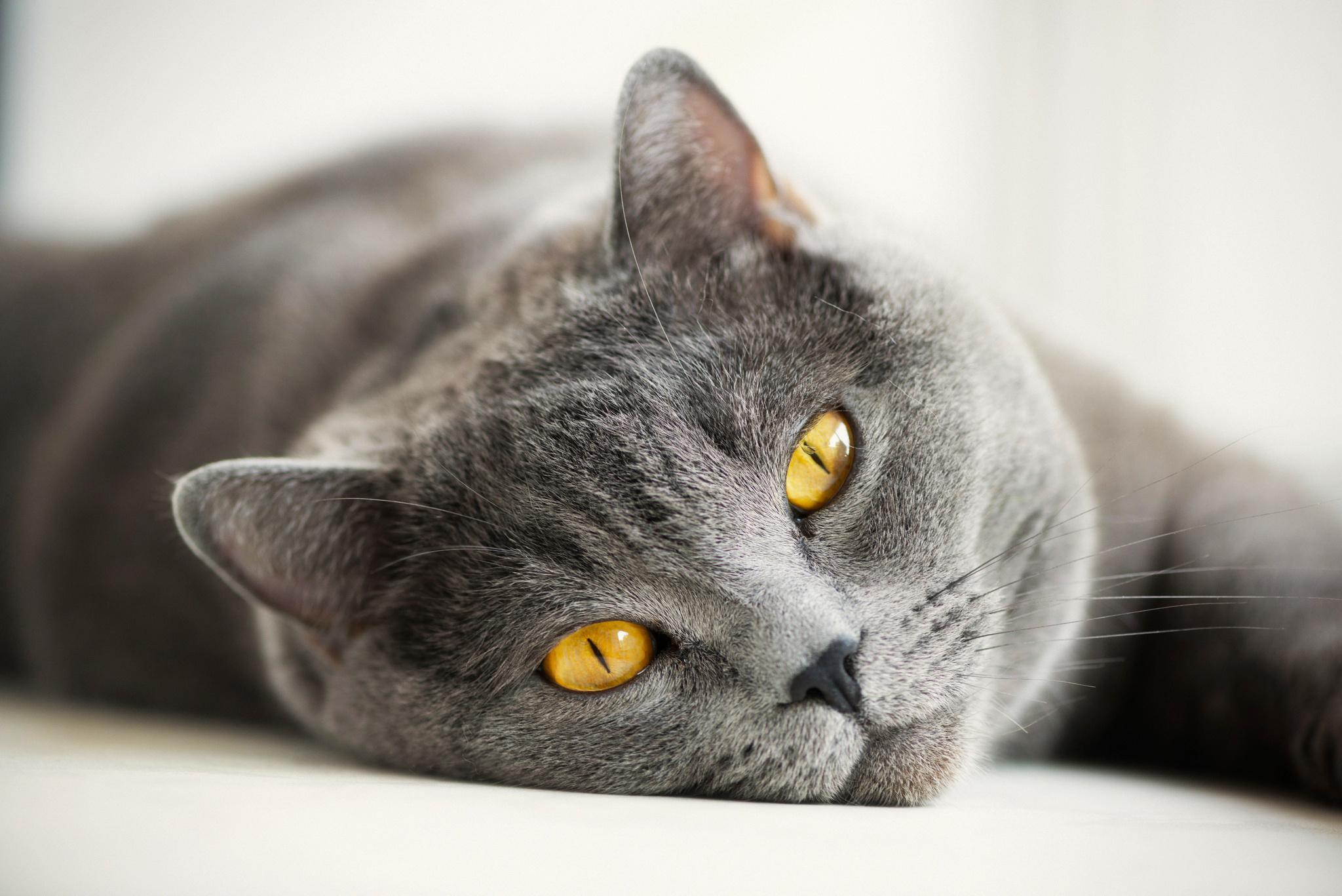 grey kitten wallpaper 294 - photo #38