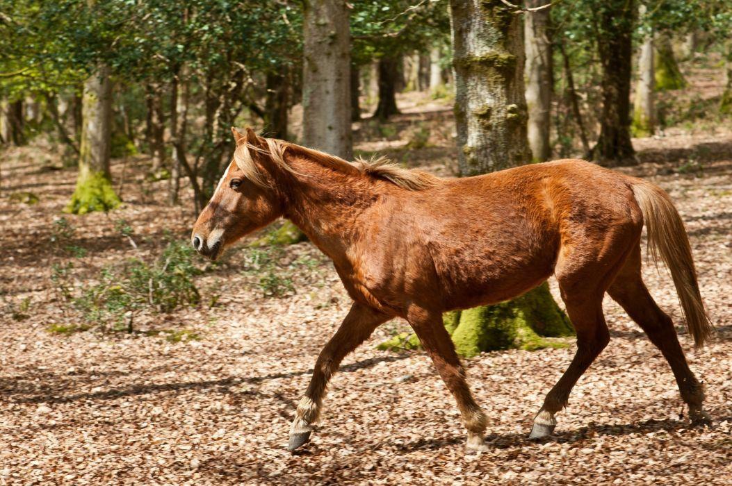 horse red running wallpaper