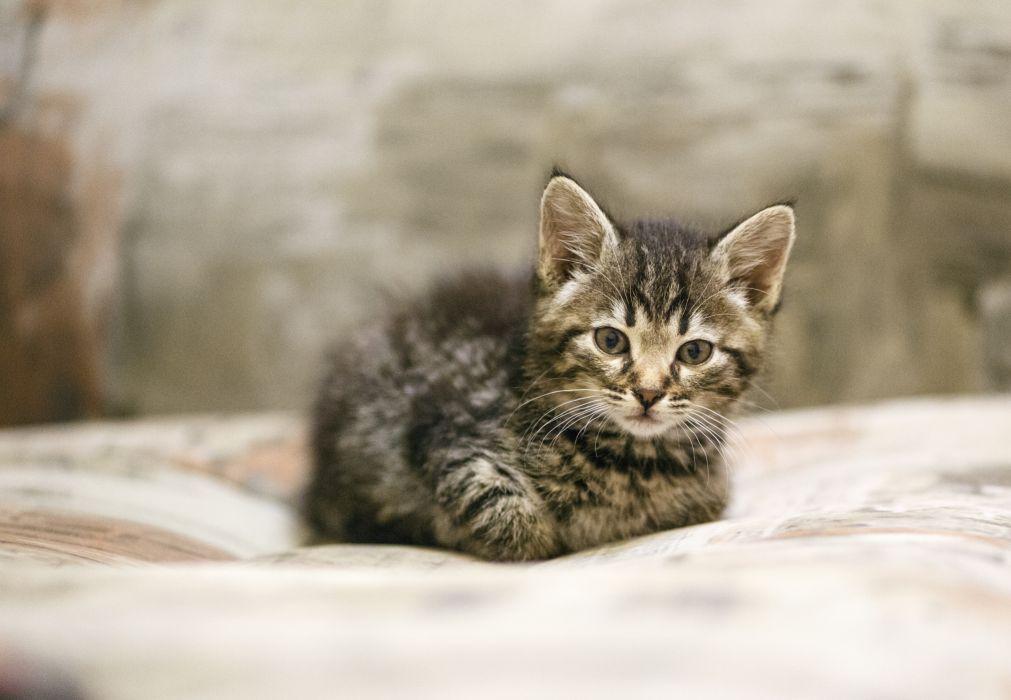 kitten    f wallpaper