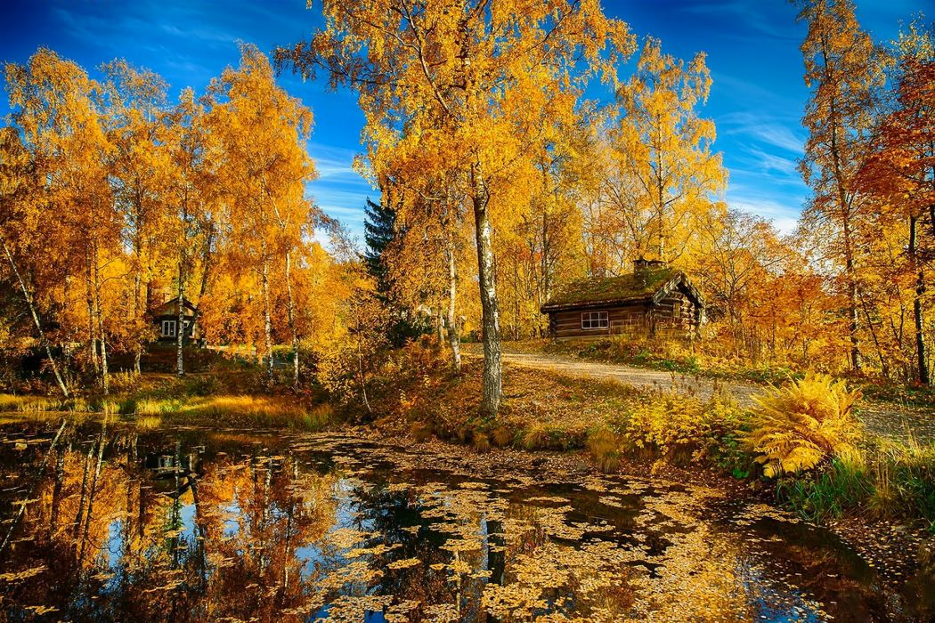 landscape nature autumn lake trees house road Norway wallpaper