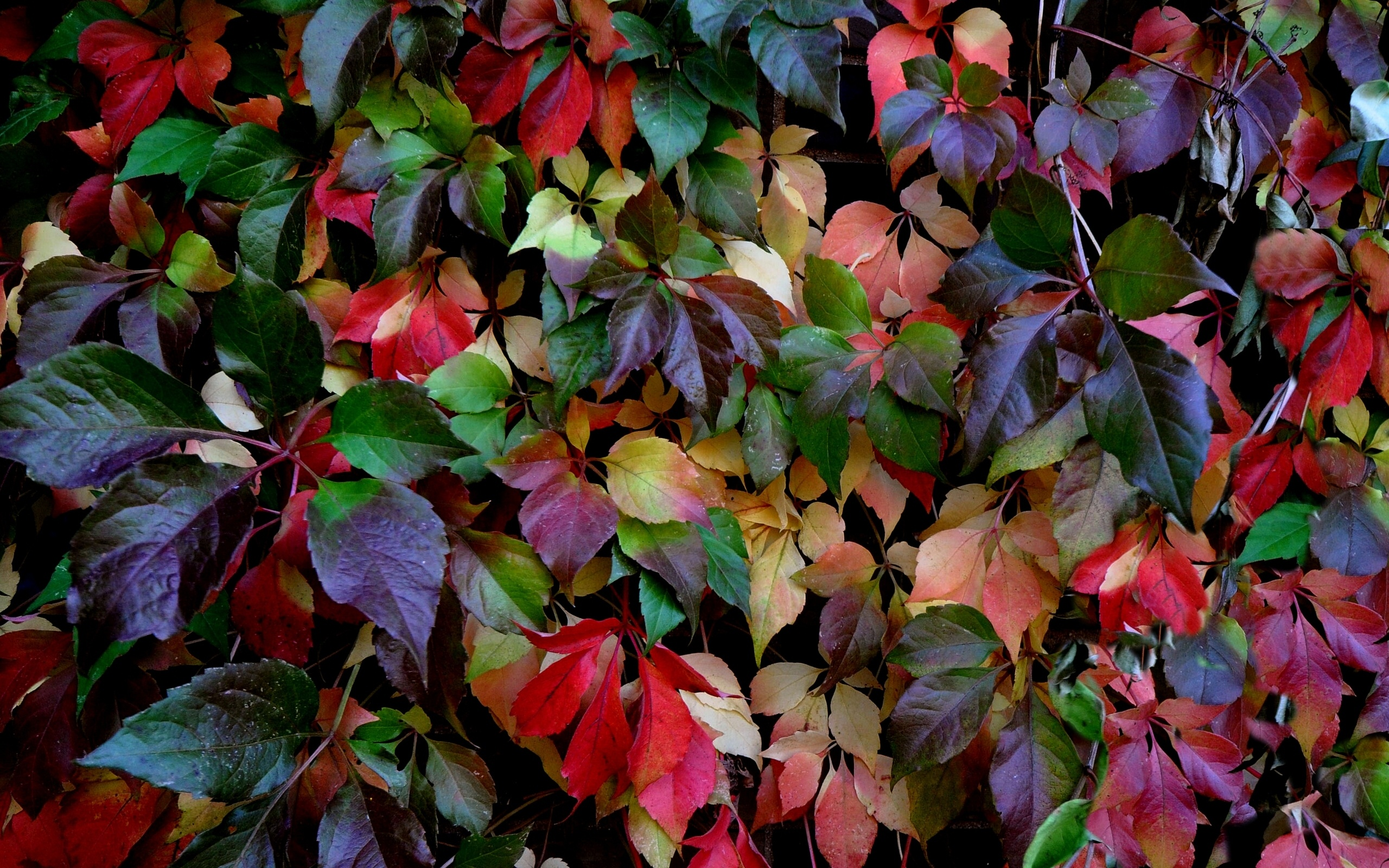 Leaves Colorful Autumn Wallpaper