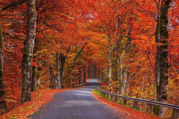 nature autumn trees foliage road Sweden wallpaper
