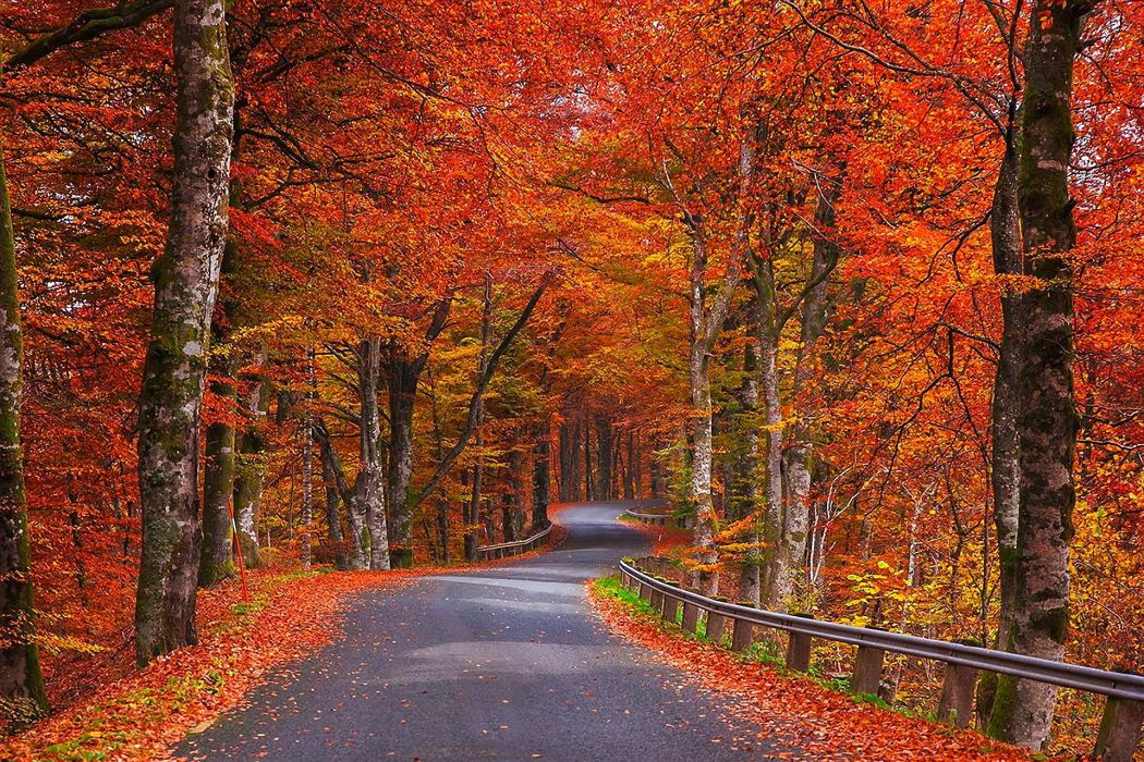 nature autumn trees foliage road Sweden wallpaper