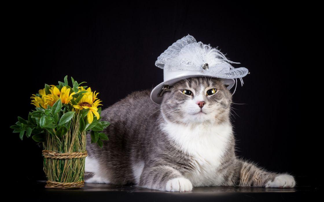 cat hat flowers wallpaper