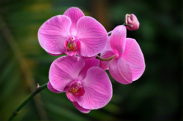 orchid macro exotic rh wallpaper