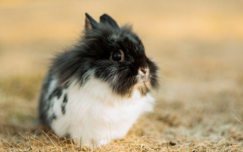 rabbit nature easter wallpaper