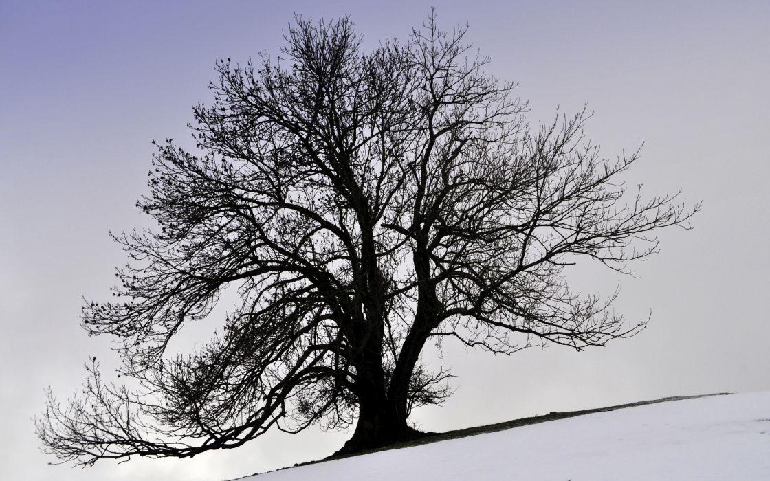 tree  winter  snow  Kroon   g wallpaper