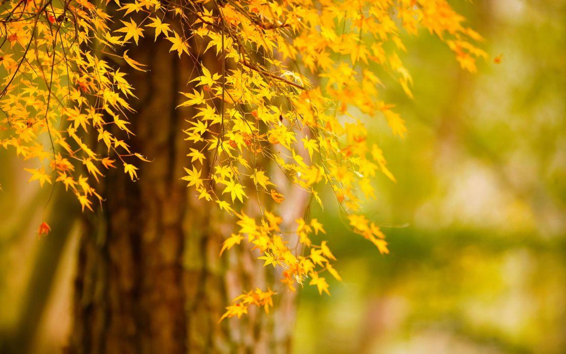 tree autumn leaves nature bokeh wallpaper