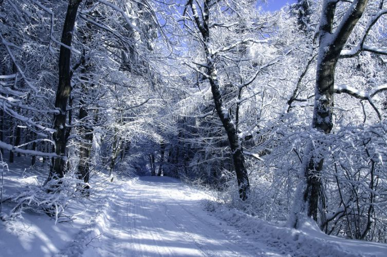 trees frost forest road snow winter wallpaper