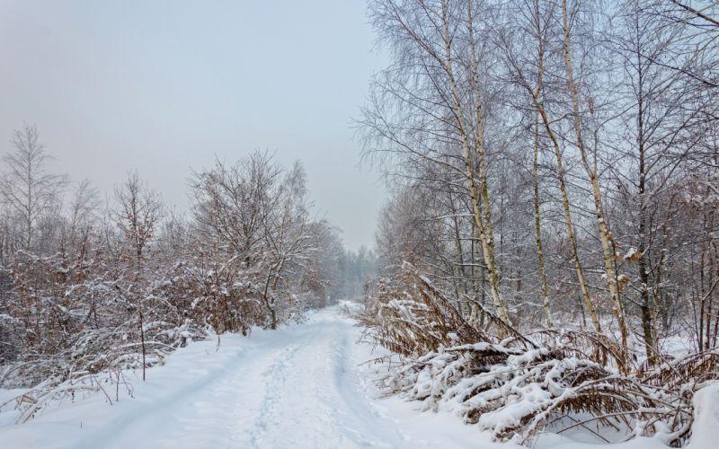 winter forest road trees landscape f wallpaper