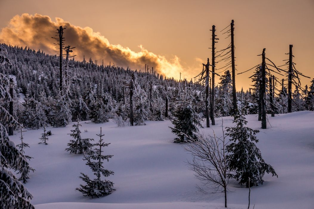 winter forest trees landscape    g wallpaper
