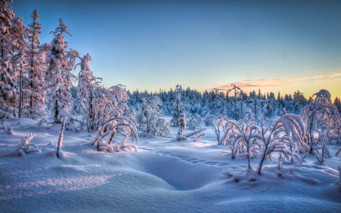 winter trees forest snow landscape wallpaper