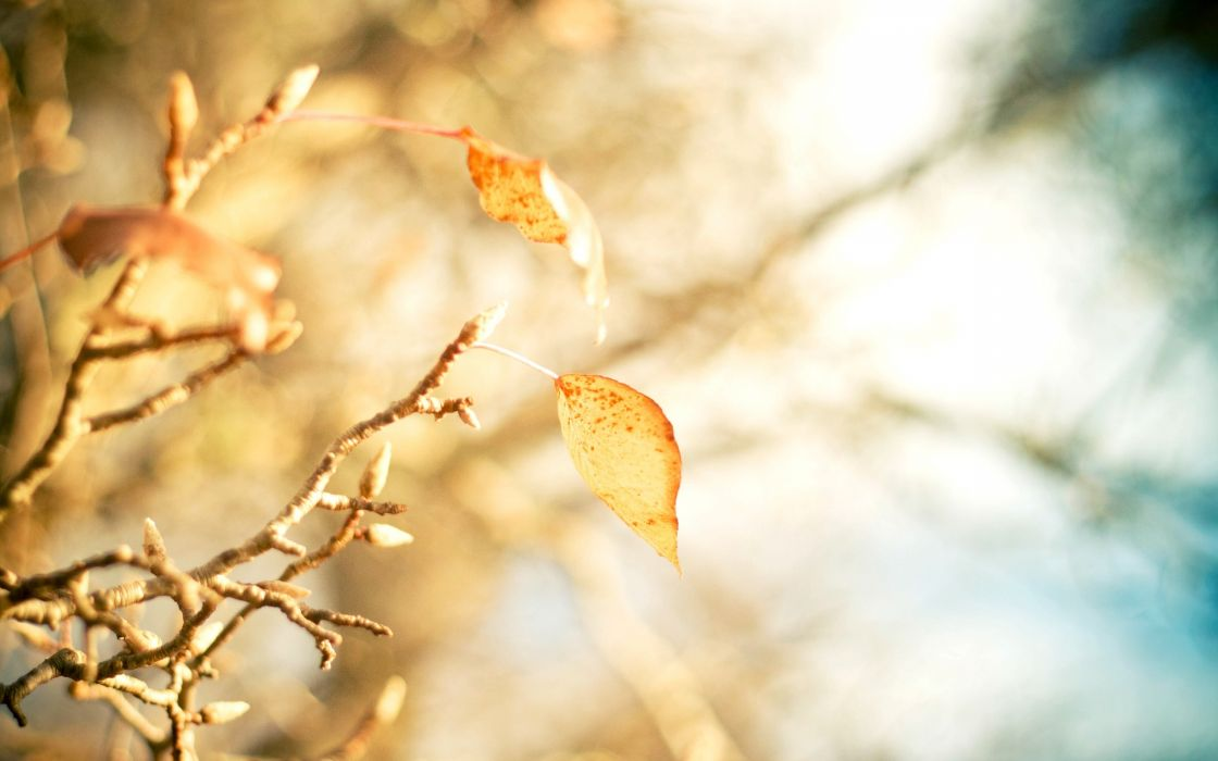 yellow leaves branch close up leaves bokeh autumn wallpaper
