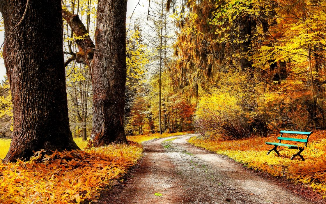 autumn park nature trees bushes leaves yellow road bench wallpaper
